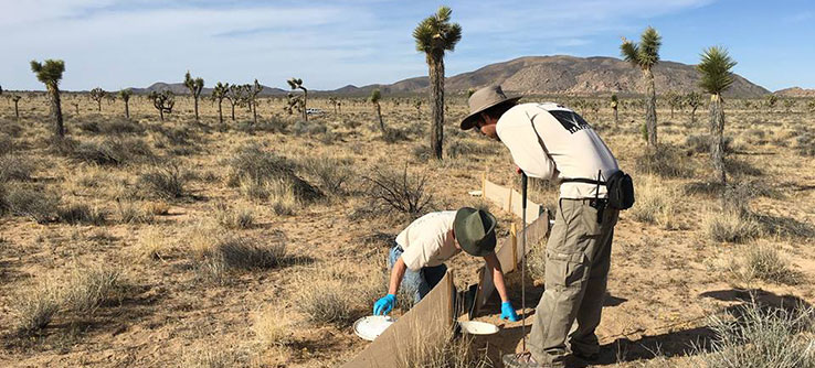 Saving Joshua Trees Desert Species