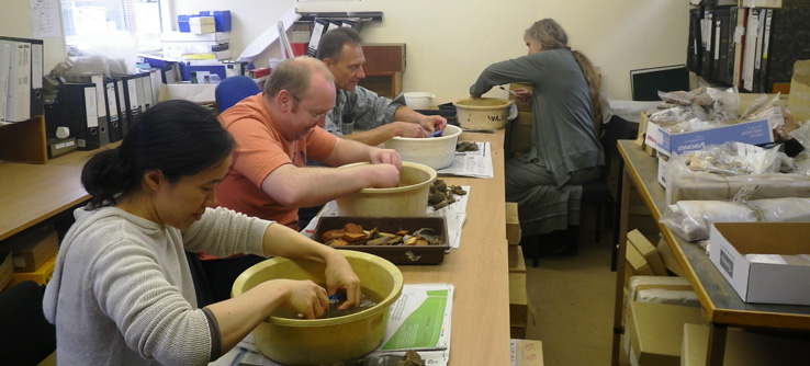 Volunteers cleaning archaeological finds.