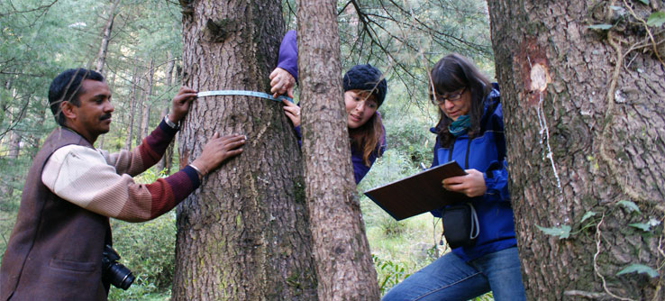 Volunteers measure the diameter of a tree.