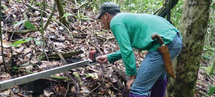 Measuring leaf litter in the rainforest.