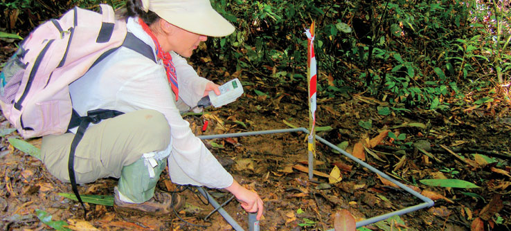A team member monitors vegetation in a research plot.