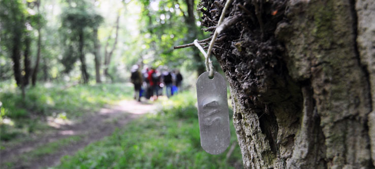 Tags identify trees in Wytham Woods, a research spot in rural England.