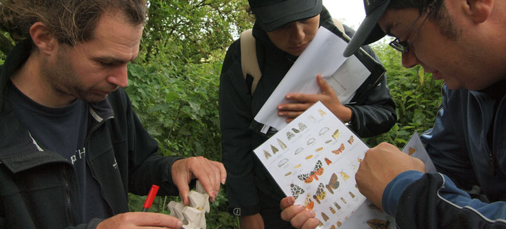 The team works to identify moths and butterflies in the forest.