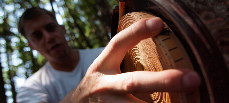 Measuring tree diameter helps calculate how much carbon the forest stores.