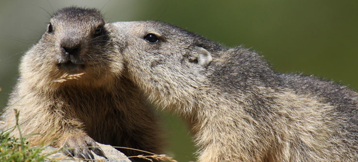 Earthwatch Expeditions: Of Mountains and Marmots: Climate Change in the French Alps