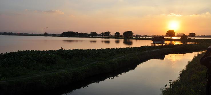 Experience the East Kolkata Wetlands