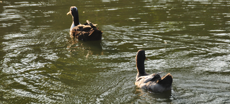 Abundant wildlife frequent the wetlands of Kolkata