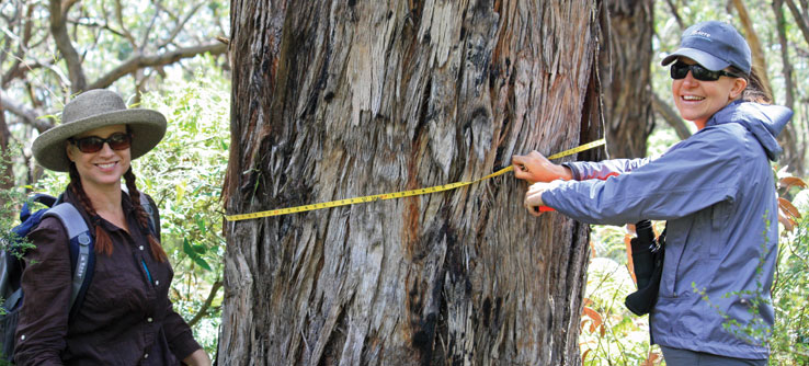 Earthwatchers measure the diameter of a tree.
