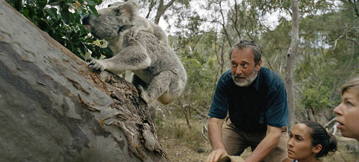 Dr Melzer and volunteers releaseing a Koala