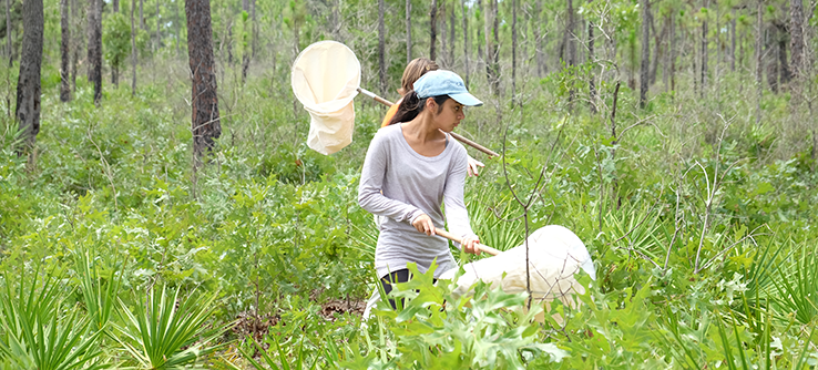 Using nets to catch butterflies in Florida