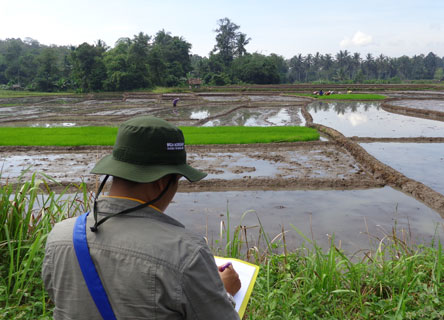 Corporate employee assessing biodiversity risks and opportunities for an agricultural supply chain.