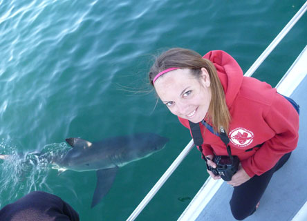 Katie Gledhill on a research boat as a small great white shark swims past.