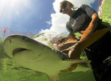Katie has a passion for introducing people to hands-on work with sharks.