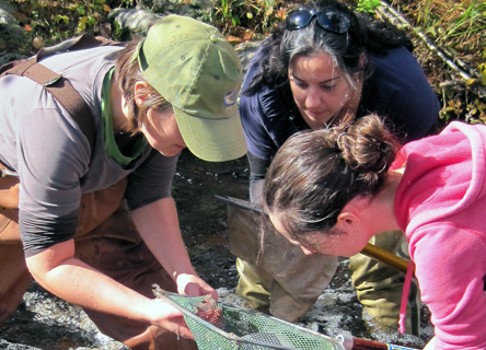 Dr. Sarah Nelson leading volunteers with freshwater research.