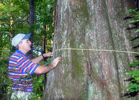Dr. Williams Conner measuring tree growth.