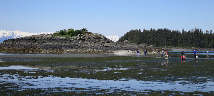 Set beach seines to count and identify fish in the seagrass bed.