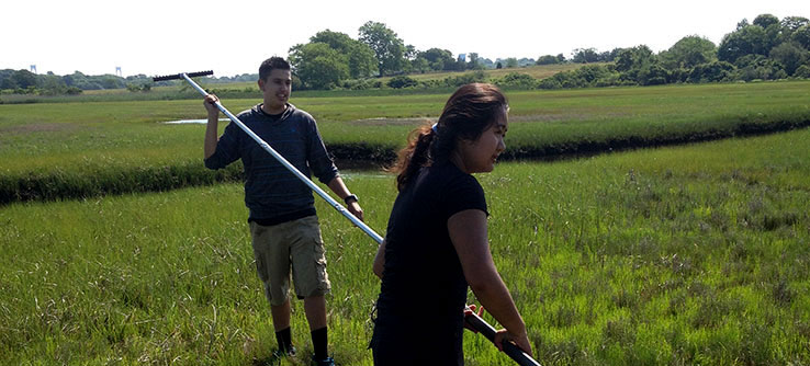Help to lay and survey transects along the marsh.