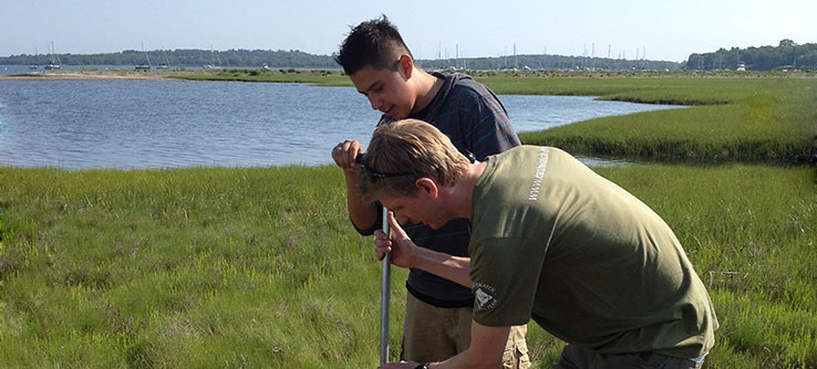 Volunteers will collect samples of the microfauna that live in the marshes for analysis.