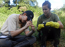 More than 100 Ernst & Young employees from across the Americas have participated in Earthwatch expeditions since the onset of the program in 2009.