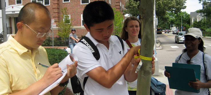 Teams explore the city of Cambridge as they record data on its trees.
