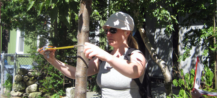 Researchers always measure a tree's diameter at breast height, or DBH.