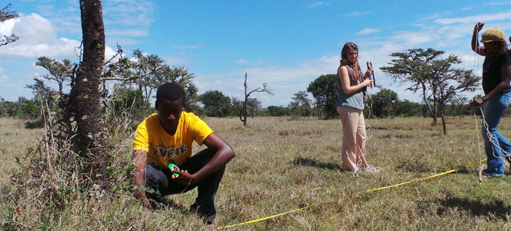 volunteers lay transect lines on the kenya project