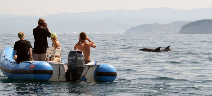 The research team documents a dolphin sighting.