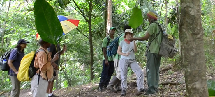 Field teams assess habitat associated with ocelot presence and activity.