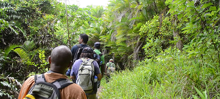Teams hike through vegetation to deploy and collect camera traps.