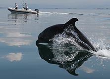 Dolphin conservation project, Greece