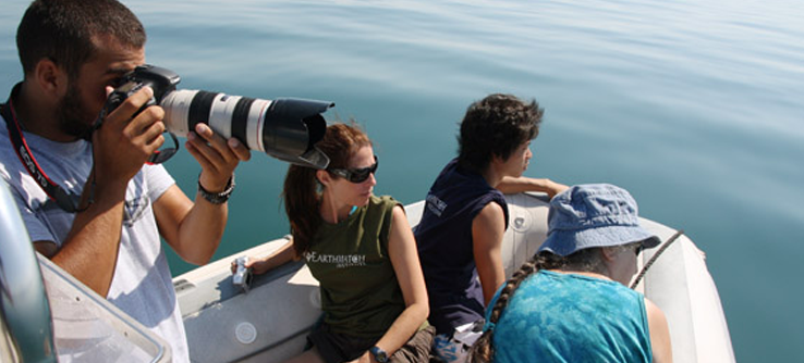 Volunteer photographing dolphins from research vessel