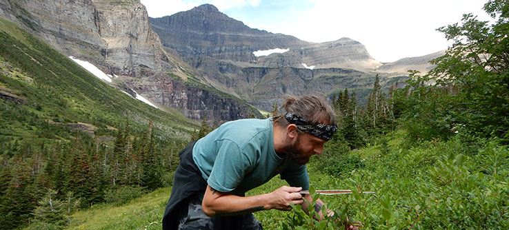 "Join researchers in ""big sky country"" in Montana to assess huckleberry production."