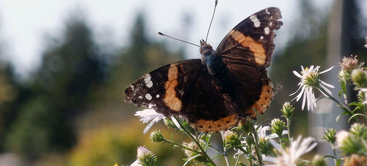 Global warming could change when butterflies pollinate plants.