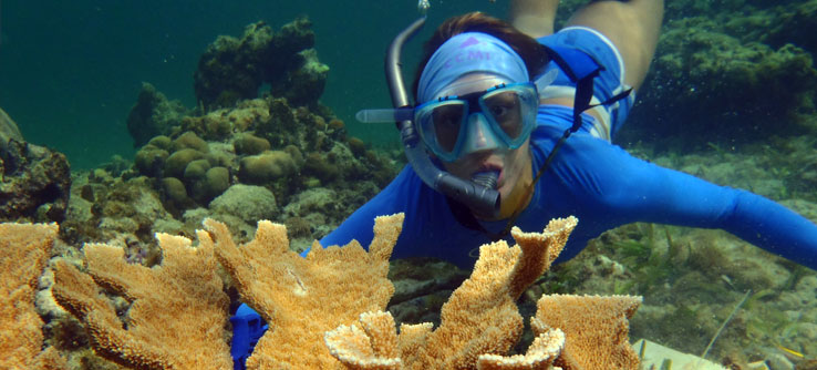 Earthwatch Expeditions: Rescuing Coral Reefs in the Cayman Islands