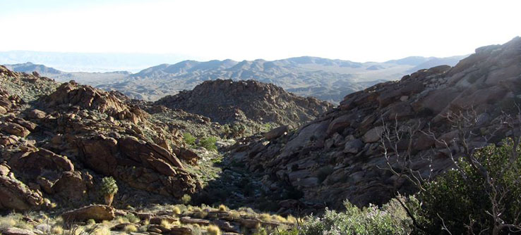 Earthwatch Expedition: Saving Joshua Tree