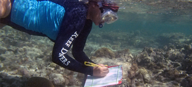 Earthwatch Expedition: Rescuing Coral Reefs in the Cayman Islands