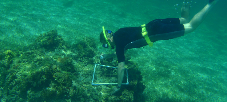 Earthwatch Teen Expedition: Snorkeling to Protect Reefs in The Bahamas