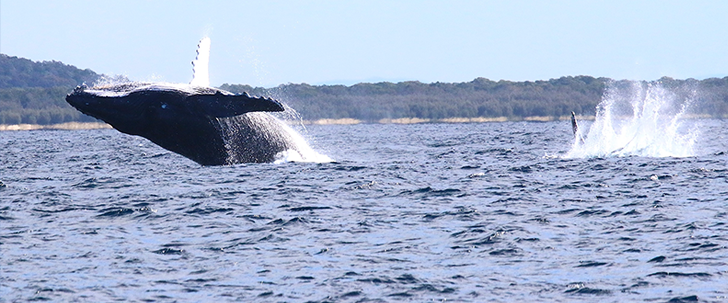 Observe and record whales' behavior