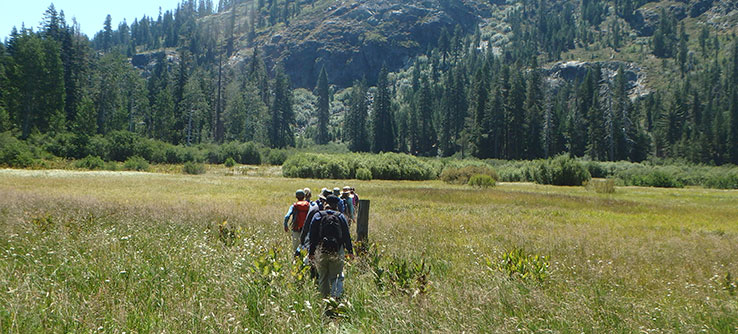 Restoring Meadows in the Sierra Nevada Mountains