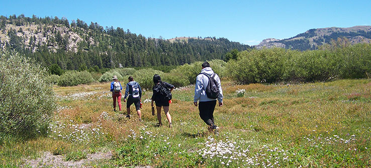 The meadows in the Sierra Nevada function like sponges, collecting and storing water.