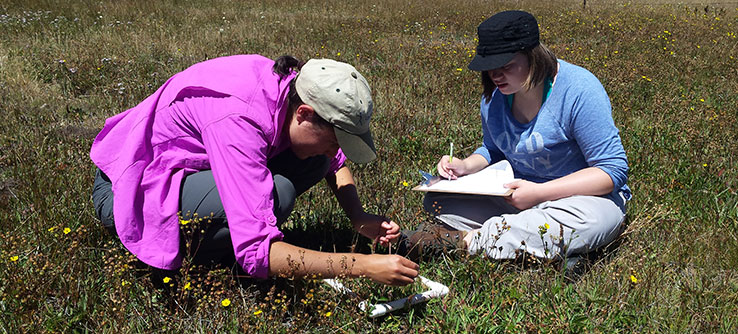 Earthwatch volunteers record the presence of flower and grass species in the meadows.