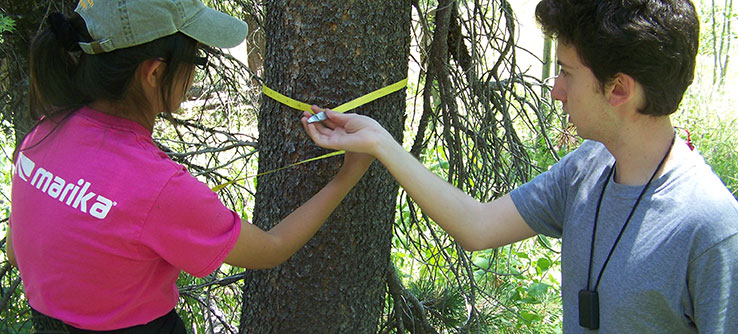 Volunteers evaluate aspen stands and monitoring encroaching conifers.