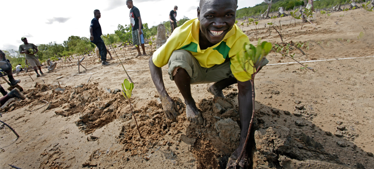 Kenyan volunteer planting mangroves