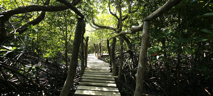 Mangrove forest, Kenya