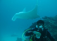 Assissting with manta ray research in Queensland