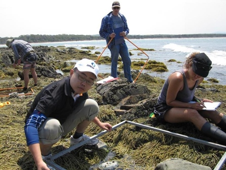 marine, shoreline, sampling, NSW