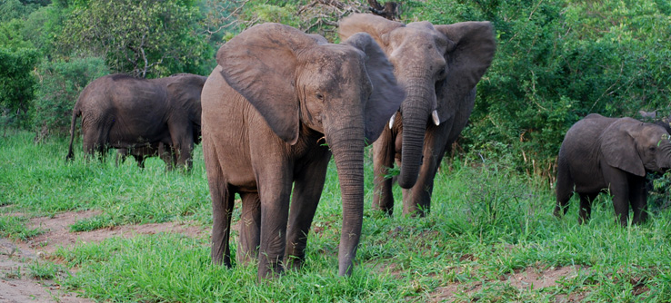 Elephants in the Majete Reserve, Malawi, southeast Africa