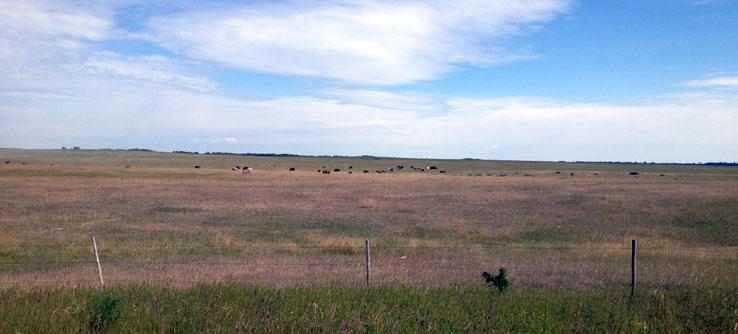 Saskatchewan is the heart of Canada's grasslands.