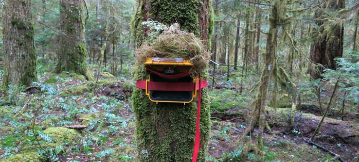 By Tracking The Fate Of Trees Scientists Aim To Better Understand Whats Happening In Forest So They Can Predict Future Changes Within Old Growth