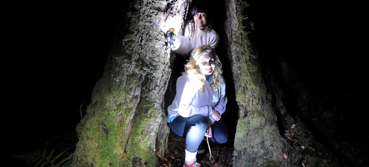 Earthwatch volunteers in Australian forest at night, using spotlights to find frogs